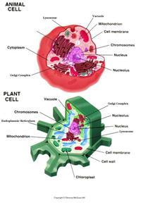 Cells-Theme Unit, Lessons, Activities, Pictures, Resources